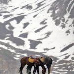 نخستین نمایشگاه صنعت اسب - محمد رضایی | نگارخانه چیلیک | ChiilickGallery.com