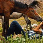 نخستین نمایشگاه صنعت اسب - سیدمحمدصادق حسینی | نگارخانه چیلیک | ChiilickGallery.com