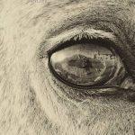 نخستین نمایشگاه صنعت اسب - امید جعفرنژاد | نگارخانه چیلیک | ChiilickGallery.com