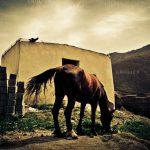 نخستین نمایشگاه صنعت اسب - سعید عامری | نگارخانه چیلیک | ChiilickGallery.com