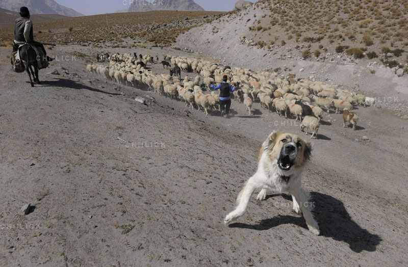 پنجمین جشنواره عکس زمان - حسن غفاری ، راه یافته به بخش ب | نگارخانه چیلیک | ChiilickGallery.com