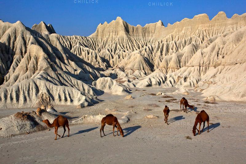 نمایشگاه سالانه انجمن عکاسان مطبوعات - فرزاد هاشمی | نگارخانه چیلیک | ChiilickGallery.com