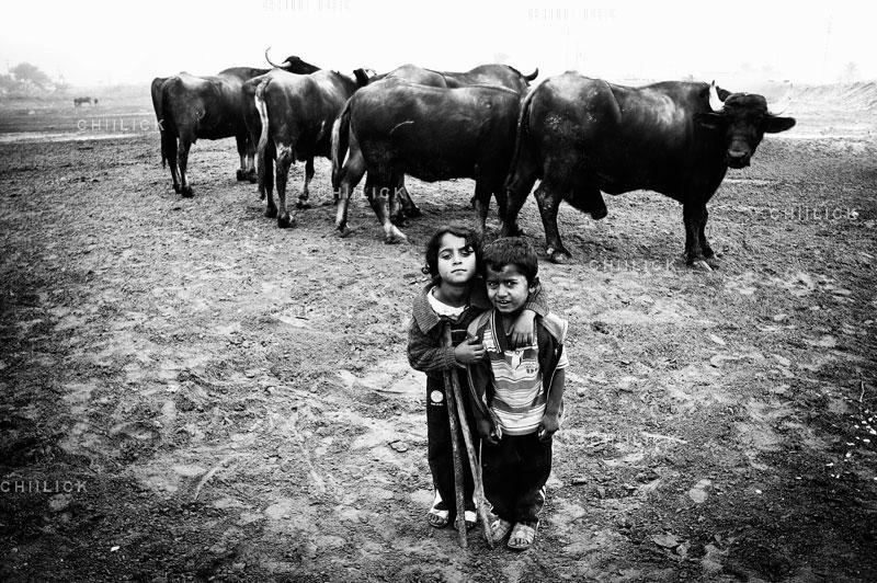 دومین جشنواره عکس شهریار - امین پروین | نگارخانه چیلیک | ChiilickGallery.com