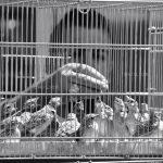 دومین جشنواره عکس شهریار - وحید عبداللهی | نگارخانه چیلیک | ChiilickGallery.com