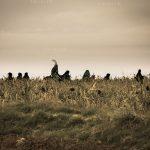 سومین سوگواره قاب خالی خورشید - سجاد یوسفی | نگارخانه چیلیک | ChiilickGallery.com
